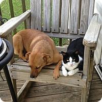 Adopt A Pet :: Tick - North Little Rock, AR