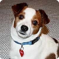 Adopt A Pet :: Nico - Yorba Linda, CA
