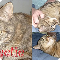 Domestic Shorthair Cat for adoption in West Lafayette, Indiana - Elsa