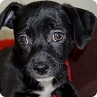 Adopt A Pet :: Mindi - La Habra Heights, CA