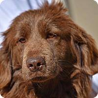 Adopt A Pet :: Meegan - New Canaan, CT