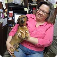 Adopt A Pet :: Petey - Geneseo, IL