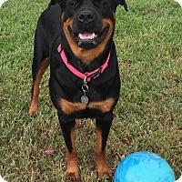 Adopt A Pet :: Monti - Alachua, GA