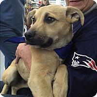 Adopt A Pet :: Dickory - Harmony, Glocester, RI