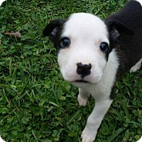 Adopt A Pet :: Lily - West Bend, WI