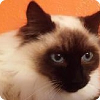 Adopt A Pet :: Frodo - Ennis, TX
