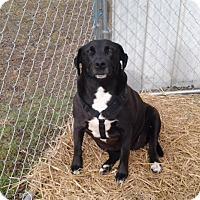 Adopt A Pet :: Babe (ETAA) - Plainfield, CT