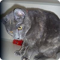 Adopt A Pet :: Jenny - Hamburg, NY