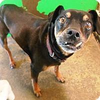 Adopt A Pet :: Frederick - Redding, CA