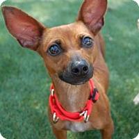 Adopt A Pet :: Red - Bradenton, FL