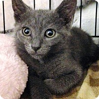 Adopt A Pet :: Sasha - River Edge, NJ