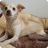 Adopt A Pet :: Sunny - Stockton, CA