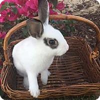 Adopt A Pet :: Spice - Santa Clarita, CA
