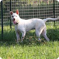 Adopt A Pet :: Vic - Natchitoches, LA