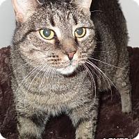 Adopt A Pet :: Agnes - Lapeer, MI