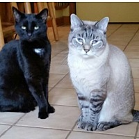 Adopt A Pet :: Carmen & Stanzie-Courtesy Post - Beachwood, OH