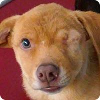 Adopt A Pet :: ROSITA (video) - Los Angeles, CA