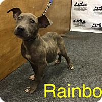Terrier (Unknown Type, Small) Puppy for adoption in Waycross, Georgia - Rainbow