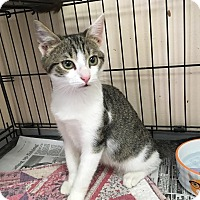 Adopt A Pet :: Twizzler - East Brunswick, NJ
