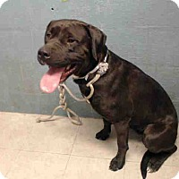 Adopt A Pet :: A4998757 is at Lancaster - Beverly Hills, CA