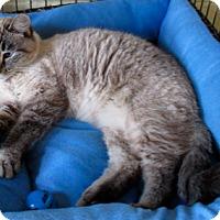 Adopt A Pet :: Lotus - Euclid, OH