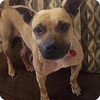 Adopt A Pet :: Jo in CT - Manchester, CT