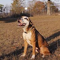 Adopt A Pet :: Gabriel - Warner Robins, GA