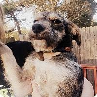Adopt A Pet :: Tucker - Portland, OR