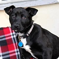 Adopt A Pet :: Cara - Los Angeles, CA