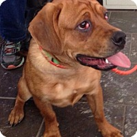 Adopt A Pet :: Lexi - Freeport, NY