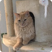 Adopt A Pet :: Ed - Port Charlotte, FL