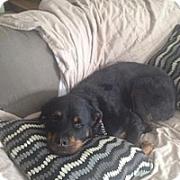 Adopt A Pet :: LuLu - Brewster, NY