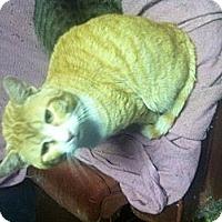 Adopt A Pet :: JoJO - Clay, NY