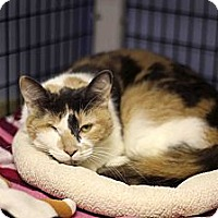 Adopt A Pet :: Heather - Chicago, IL