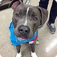 Adopt A Pet :: Bluie - San Diego, CA