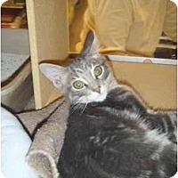Adopt A Pet :: Oscar - Brea, CA