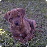 Adopt A Pet :: PuP 1 - Sacramento, CA