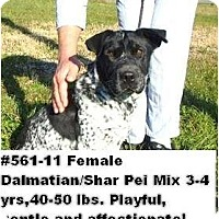 Adopt A Pet :: # 561-11 - ADOPTED! - Zanesville, OH