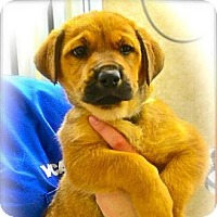 Adopt A Pet :: Suzie - Ft. Lauderdale, FL