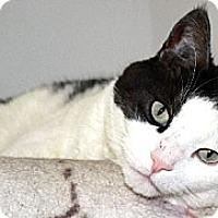 Adopt A Pet :: Phantom - Red Deer, AB