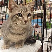 Adopt A Pet :: Piskie - Edmond, OK