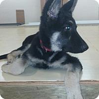 Adopt A Pet :: Merlin - Mill Creek, WA