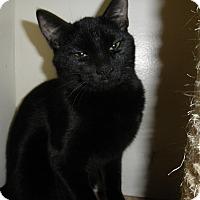 Adopt A Pet :: Skye - Milwaukee, WI