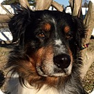 Adopt A Pet :: Maverick B Awesome boy~ lower fee
