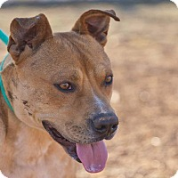 Adopt A Pet :: Sy - Post, TX