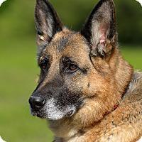 Adopt A Pet :: Ady - Dacula, GA