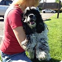 Adopt A Pet :: Misty -Adopted! - Kannapolis, NC