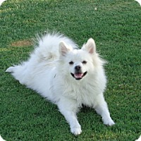 Adopt A Pet :: Bruce - Only $75 adoption! - Litchfield Park, AZ