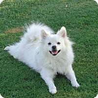 Adopt A Pet :: Bruce - Only $75 adoption! - Litchfield Park, AZ