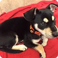 Adopt A Pet :: Jagger - Rancho Cucamonga, CA